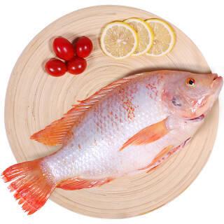 仙泉湖 生态鲷鱼/星洲红鱼 三去500g/袋 去鳃去鳞去内脏 方便菜 海鲜水产 14.5元