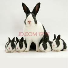 ¥69 朗缤 兔子宠物 黑白兔1只