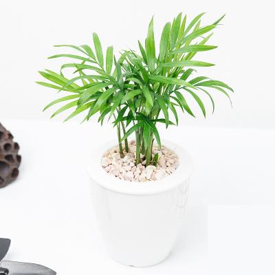 懒人园艺 水培盆栽 17款可选 白盆 6.8元包邮