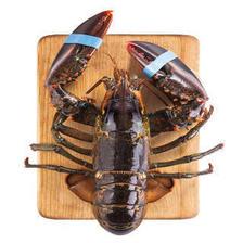 味库WECOOK 加拿大进口鲜活波士顿大龙虾盒装 海鲜水产 500-400g*2只 148元