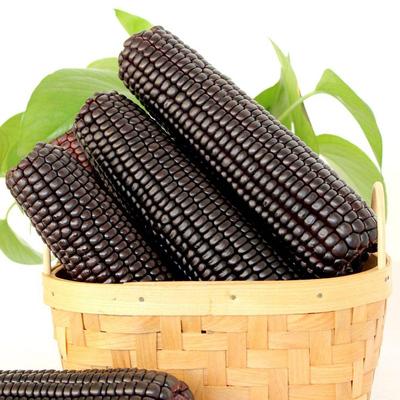 东北黑紫甜糯玉米10根2kg装 券后16.8元