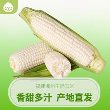 福建漳州牛奶玉米4斤 新鲜花果山水果甜玉米生吃白玉米批发包邮 32.8元