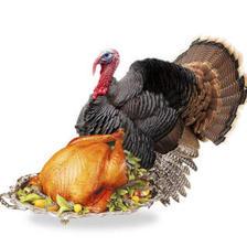 芮瑞 散养火鸡 约3kg 家庭份 470元