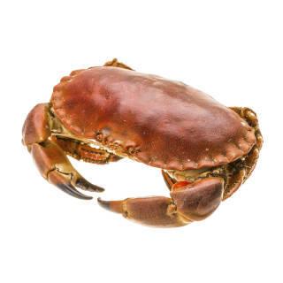 拓食 爱尔兰熟冻面包蟹/黄金蟹 600-800g/只 袋装 海鲜水产 *3件 108.6元(合36.2元/件)
