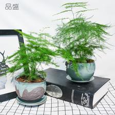 品盛 文竹盆栽 5款花盆可选 6.8元包邮(需用券)